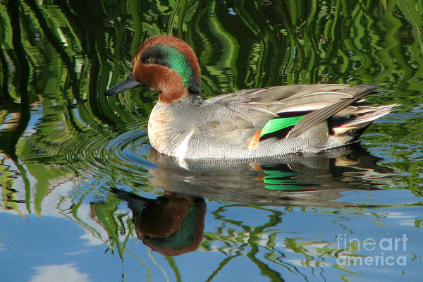 Ducks Art Print featuring the photograph Reflective Passing by Frank Townsley