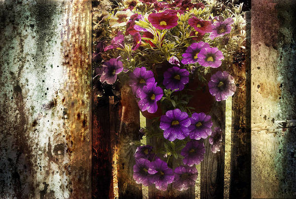 Fence Art Print featuring the photograph Relaxed Beauty by Steve Buckenberger