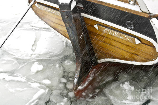 Europe Art Print featuring the photograph Resting In Ice by Heiko Koehrer-Wagner
