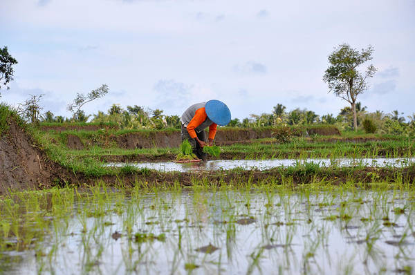 Asia Art Print featuring the photograph Rice Field by Kamel Rekouane