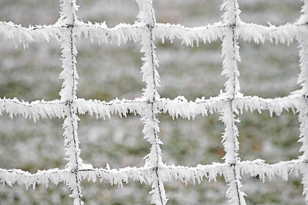 Frost Art Print featuring the photograph Rime Covered Fence by Christine Till