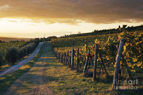 Alcohol Art Print featuring the photograph Road Through Vineyard by Jeremy Woodhouse
