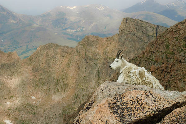 Horizontal Art Print featuring the photograph Rocky Mountain Goat by Robin Wilson Photography