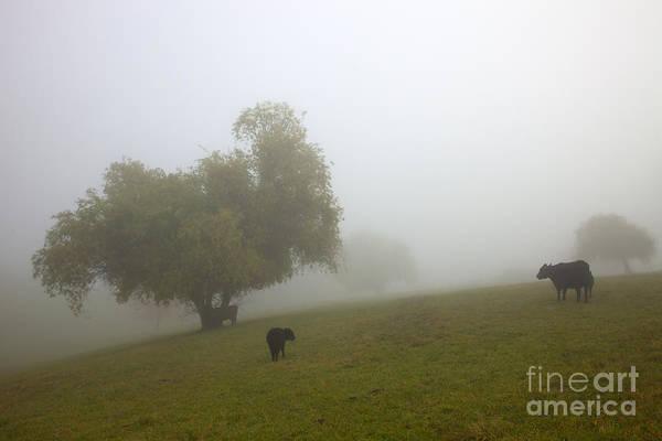 Fog Art Print featuring the photograph Rural Fog by Mike Dawson