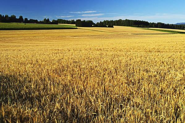 Horizontal Art Print featuring the photograph Rural Summer Scene by Jochen Schlenker
