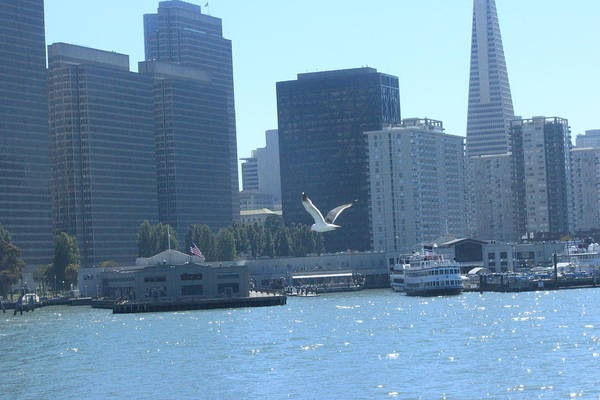 Seagull Art Print featuring the photograph San Francisco Collection #21 by Raquel Amaral