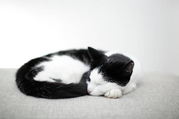 Horizontal Art Print featuring the photograph Sleeping Cat by Marcel ter Bekke