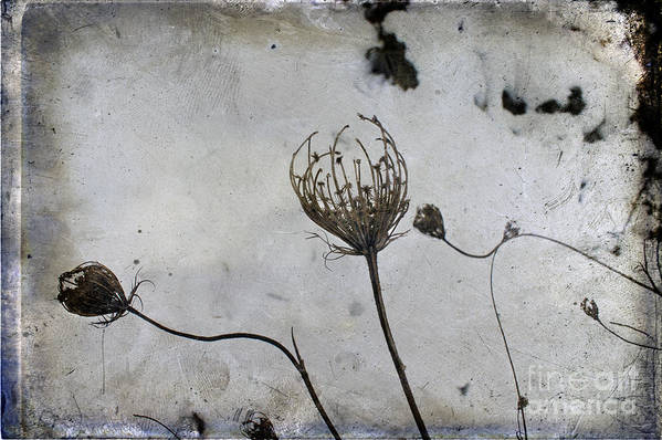 Snow Seeds Art Print featuring the photograph Snow Seeds by Paul Grand