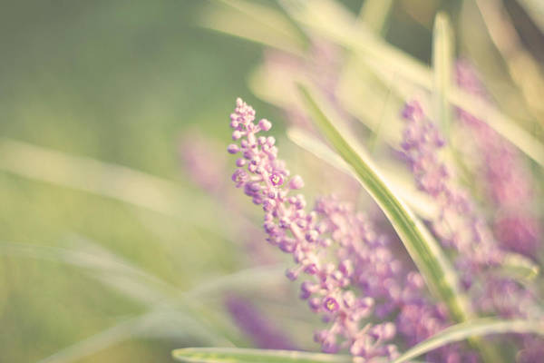 Soft Purple Flower Photography Art Print featuring the photograph Speak Softly by Amy Tyler