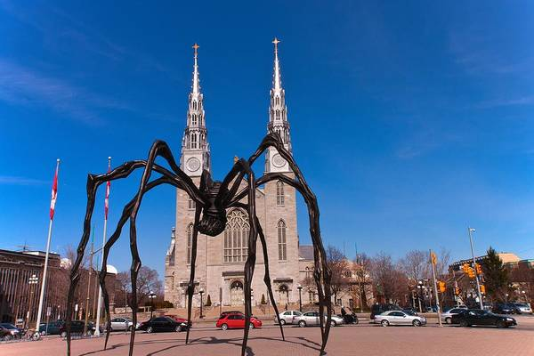 Art Print featuring the photograph Spidy by Josef Pittner