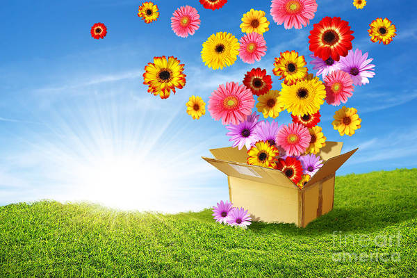 Background Art Print featuring the photograph Spring Delivery by Carlos Caetano