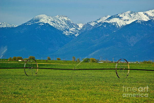 Spring Art Print featuring the photograph Spring On The Missions by Stacy La Salle