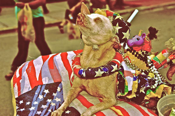 South Beach Art Print featuring the photograph Star Spangled Dog by Susi Perla