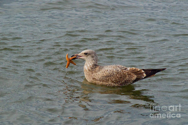 Starfish Art Print featuring the photograph Starfish N Seagull by Kathy Flugrath Hicks