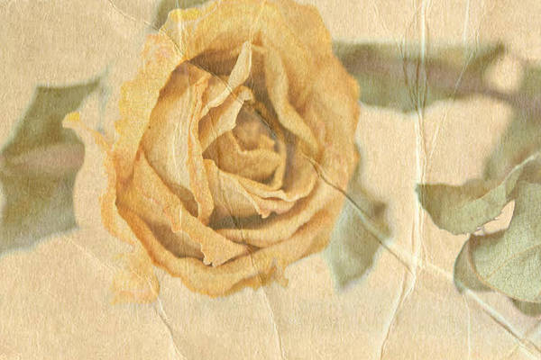 Rose Art Print featuring the photograph Still With You by Deborah Hall Barry
