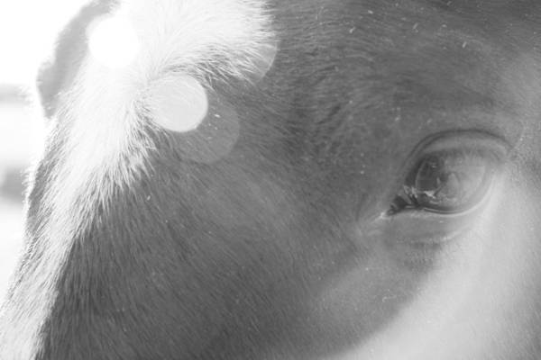 Horse Art Print featuring the photograph Sun In Her Eye by Ellery Russell