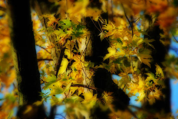 Autumn Art Print featuring the photograph Sun In Trees by Simone Hester