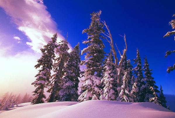 Country Art Print featuring the photograph Sunrise Over Snow-covered Pine Trees by Natural Selection Craig Tuttle