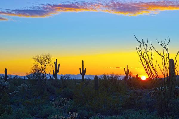Arizona. Desert Plants Saguaro Art Print featuring the photograph Sunset For You by Brian Lambert