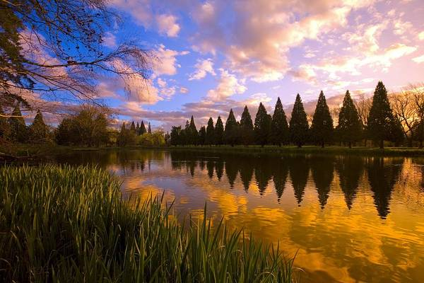 American Art Print featuring the photograph Sunset Reflection On A Pond, Portland by Craig Tuttle