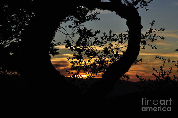Sunset Art Print featuring the photograph Sunset Through A Heart Of Branches by Kim Frank