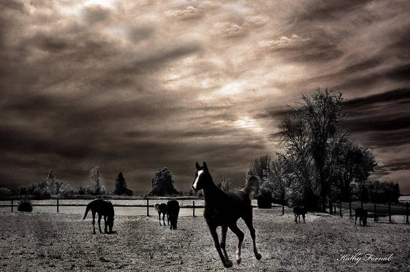 Beautiful Horse Fine Art Art Print featuring the photograph Surreal Horses Infrared Nature by Kathy Fornal