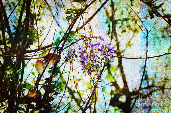 Wisteria Art Print featuring the photograph Tangled Wisteria by Andee Design