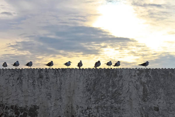 Ten Art Print featuring the photograph Ten Seagulls Stand On Top Of Stucco Wall by Chira Juti