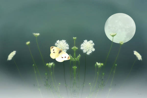 Nature Art Print featuring the photograph The Butterfly In The Moonlight by Tom York Images