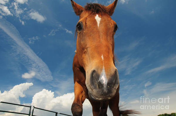 The Curious Horse Art Print featuring the photograph The Curious Horse by Paul Ward