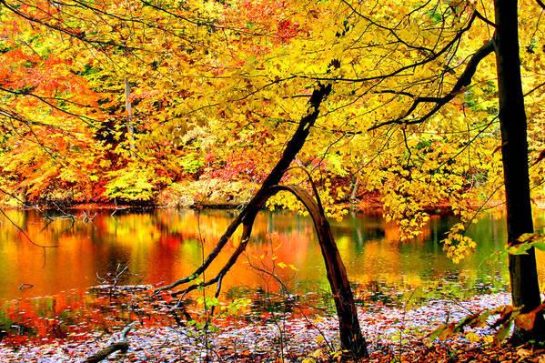 Autumn Art Print featuring the photograph The Final Bough by Kristin Elmquist