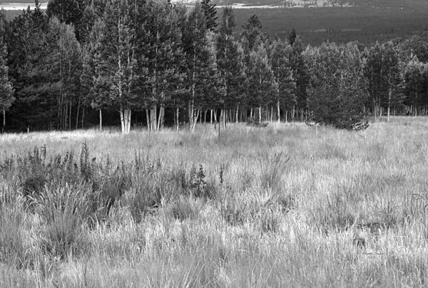 Landscape Art Print featuring the photograph The Meadow Black And White by Phyllis Denton