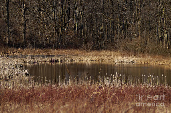 Waterhole Oasis Pond Drinking Pool Dry Forest Thirst Earth Colors Winter Art Print featuring the photograph The Oasis by Vilas Malankar