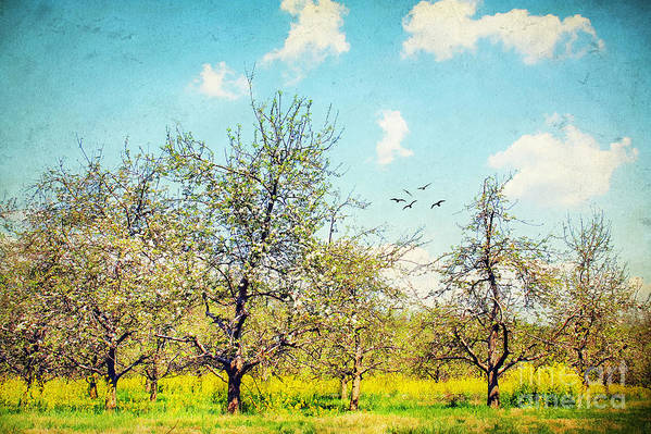 Apple Art Print featuring the photograph The Orchard by Darren Fisher