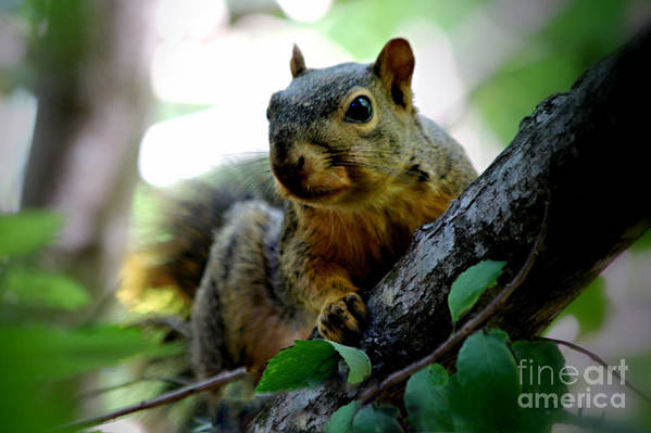 Squirrel Art Print featuring the photograph The Overseer by Cheryl Frischkorn
