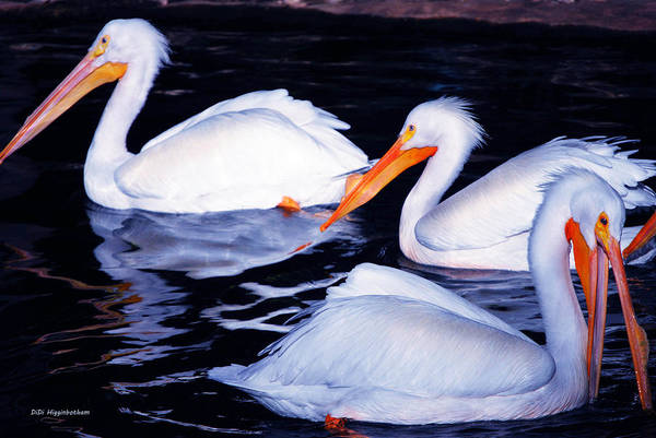 Pelican Art Print featuring the photograph This Way No This Way by DiDi Higginbotham