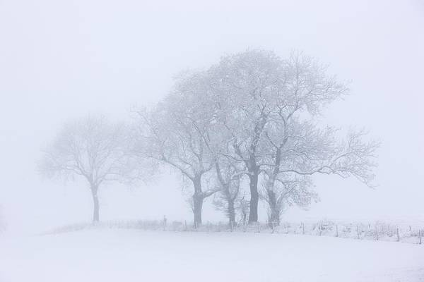 Copy Space Art Print featuring the photograph Trees Seen Through Winter Whiteout by John Short