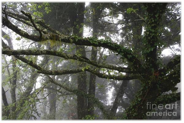 Tree. Trees. Branches Art Print featuring the digital art Tropical Rain Forest by Maxine Bochnia
