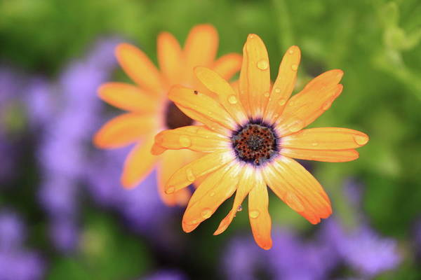 Flowers Art Print featuring the photograph Untitled by Rick Berk