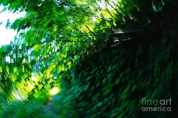 Leaves Art Print featuring the photograph Vertigo by Jeff Swan