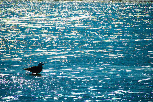 Bird Art Print featuring the photograph Water Water Everywhere by Cindy Tiefenbrunn
