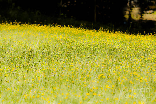 Weeds Art Print featuring the mixed media Waves Of Yellow by Kim Henderson