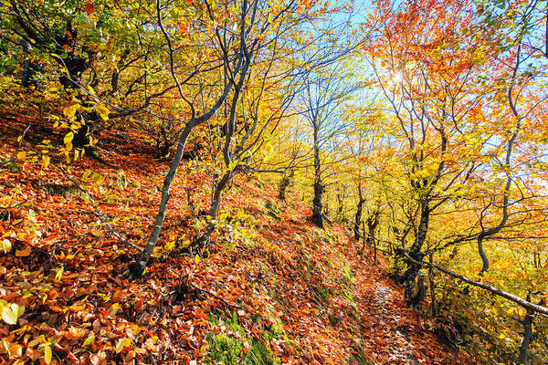 Babintsi Art Print featuring the photograph Way To The Chapel by Evgeni Dinev