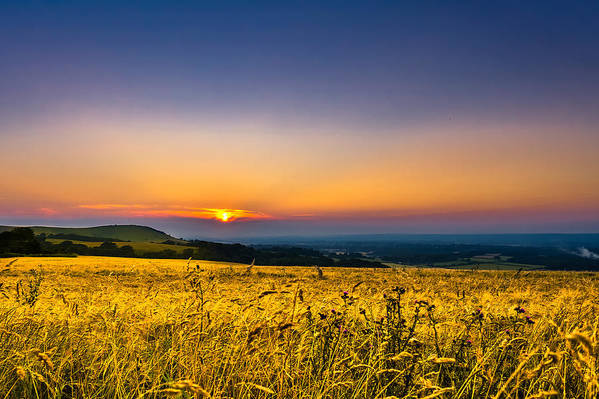 Horizontal Art Print featuring the photograph Wheat Field by Rob Webb