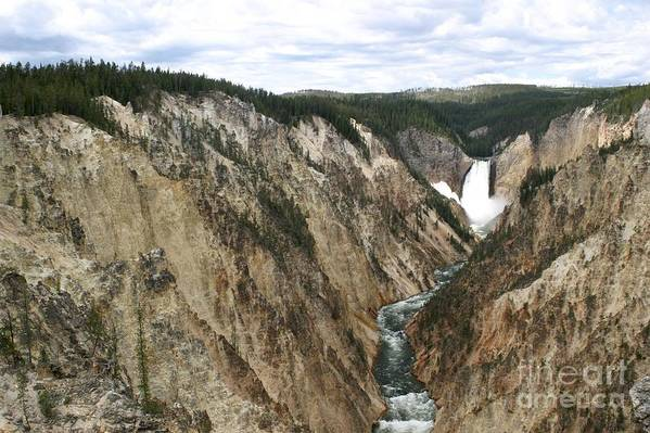 Lower Falls Art Print featuring the photograph Wide View Of The Lower Falls In Yellowstone by Living Color Photography Lorraine Lynch