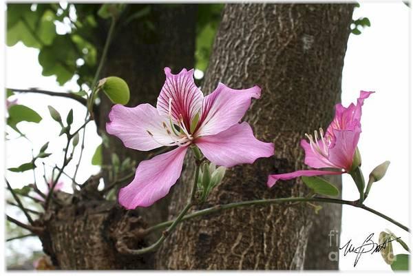 Flower Art Print featuring the digital art Wild Flower by Maxine Bochnia