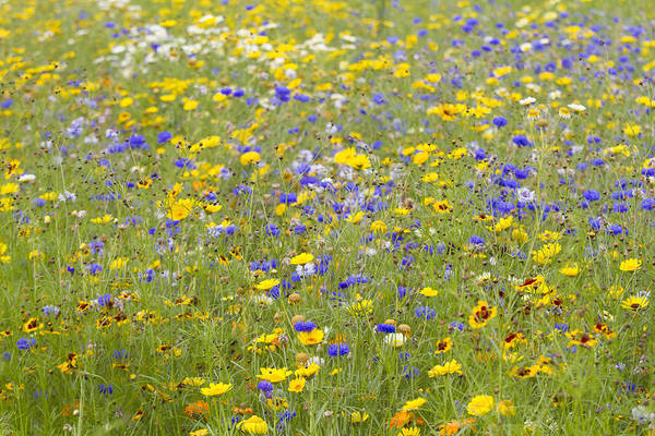 Horizontal Art Print featuring the photograph Wild Flowers In A Field by Fraser Hall
