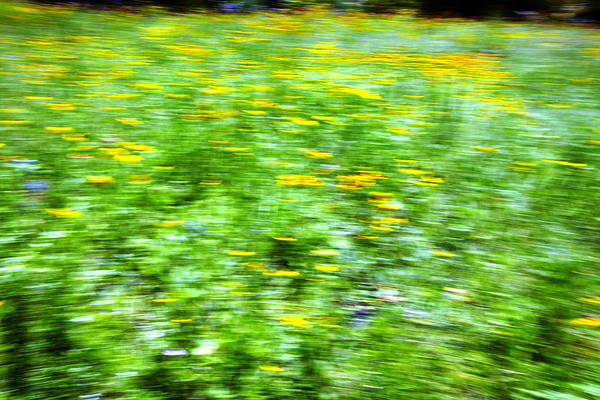 Abstract Art Print featuring the photograph Wildflowers And Wind 2 by Skip Nall