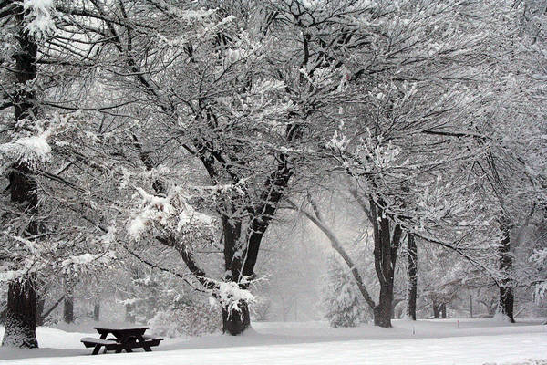 Winter Art Print featuring the photograph Winter 0002 by Carol Ann Thomas
