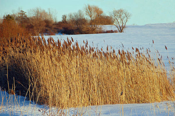 Landscape Art Print featuring the photograph Winter Breeze by Aimee L Maher Photography and Art Visit ALMGallerydotcom